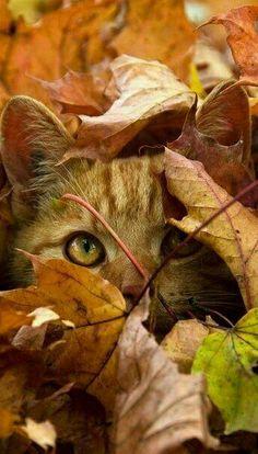 Autumn Cat.