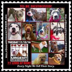 Dedicated to Saving NYC Shelter Animals