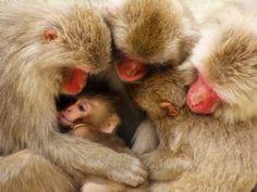 Macaque Family on Mt. Misen, Miyajima Island, Japan - Photograph by Michael Angelo Cortez.