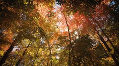 Chase Fall's Best Colors With This Peak Foliage Map | Co.Design | business + innovation + design _ 가을이다 . 아름다운 .
