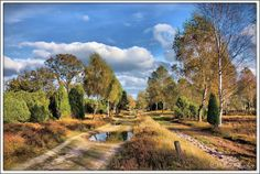 Herbst in der Lüneburger Heide // this is how autumn can look like - Germany, Lüneburger Heide. Photography by  Reiner Spangemacher