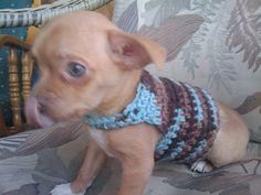 Adjustable Dog Sweater | Free Pattern