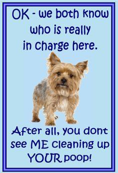 Imán del refrigerador del Yorkshire Terrier por MagnetsAndHangers