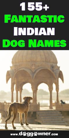 This Indian dog names list will give you a name that not only suits your dog but will also allow your dog to have a great name with meaning! #indiandognames #dognames #dogs