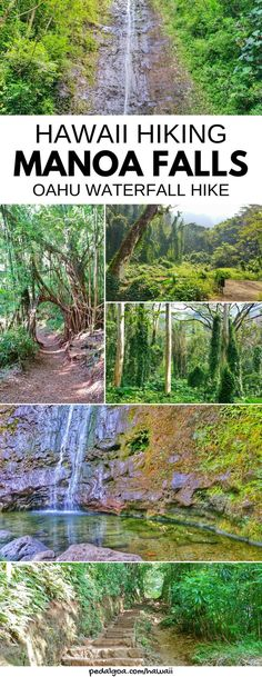 Manoa Falls Trail: Waterfalls in Oahu with one of best waterfall hikes in Hawaii. For US hiking trails in Hawaii, tons of hikes on Hawaii vacation on the island, a few Oahu waterfall hikes too. Manoa Falls is near Honolulu and Waikiki, and some people go swimming. For a day away from beaches, snorkeling, shopping, food. Outdoor travel destinations, activities, ideas for bucket list for budget adventures! Think about what to wear, what to pack for hiking to add to Hawaii packing list!