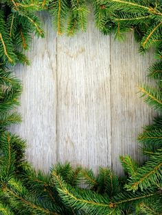 Christmas Fir Tree On Wooden Board Stock Photo (Edit Now) 107946119