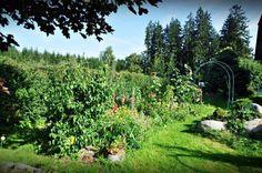 Permakulturní zahrada paní Saifrové-Foto:Zuzana Saifrová