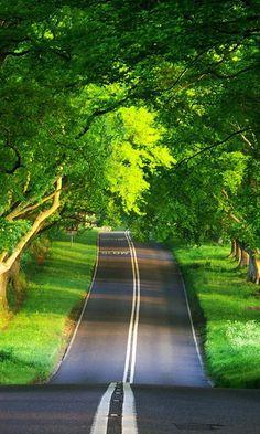 through the green.