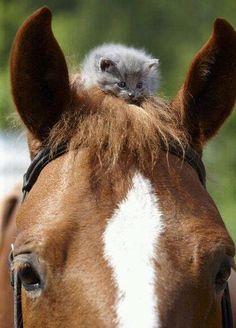 En dan durven mensen nog te denken dat paarden eng en gemeen zijn!