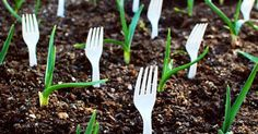 Whether you have a vegetable garden, rose garden or weed garden, here is the best round up of gardening tips and ideas that you've probably never tried! All of these little tricks are resourceful ideas for a beginner or even the novice green thumb. Easy Vegetables To Grow, Planting Vegetables, Vegetable Gardening, Gardening For Beginners, Gardening Tips, Organic Gardening, Plastic Forks, Organic Plants, Small Plants