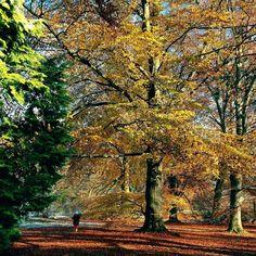 Nádherný podzim v Průhonickém parku #podzim #autumn #fall #nature #park #priroda #beauty #strom #pruhonickypark #pruhonice #ceskarepublika #czechrepublic #color #colour #sbatuzkem #vylet #trip #cestovani #dnescestujem #instatravel #instaphoto #traveling #travelling #walk