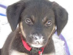 Potcake Place -- adopting Potcake puppies off the Turks  Caicos Islands into loving forever homes.