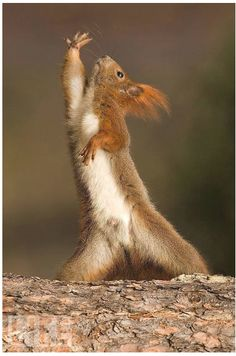 Behold, and I say unto you, that nuts will fall from the sky!  Can I get an amen?