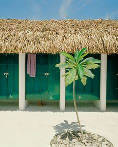 Hotel Azucar in Tulum. Next Holiday?