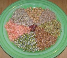 Soaking or sprouting seeds and grains are an easy way to provide your parrot with fresh live food that is similar to what they would be eating in the wild. All birds, from finches to macaws benefit from and enjoy eating these. There are different sizes and types available for every size of bird. By soaking dormant seeds they germinate and are brought back to life again. Sprouts are like little vegetable plants packed with antioxidants, vitamins, minerals, essential amino acids and protein.