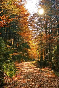 On Thanksgiving morning get out to your local park and enjoy the beautiful fall colors by taking a walk through nature Foto Nature, All Nature, Mountain Wallpaper, Autumn Scenes, Autumn Day, Autumn Walks, Fall Days, Fall Weather, Belle Photo
