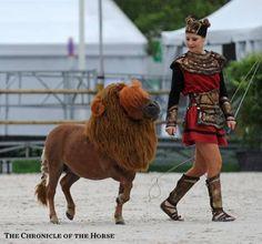 Luna The Lion