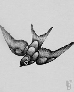 #bird #illustration #abstract #sketch #dotwork #black #lucianodelfabro  https://www.facebook.com/ldelfabro