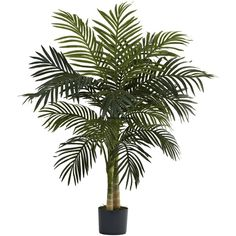 4' Golden Cane Silk Tropical Palm Tree w/Pot ($60) ❤ liked on Polyvore featuring home, home decor, floral decor, fake palm trees, artificial palm plants, faux palm trees, cane palm and tropical palm trees