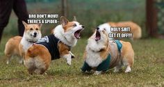 Community Post: 17 Ways To Tell Corgis Are The Right Dogs For You