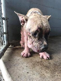 The gentle dog they named Dusty had been so poorly neglected, his skin was raw and his spirit was broken. He was deemed to be in critical condition and was rushed to the emergency room for treatmen…