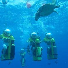 Honolulu Hawaii Attractions | ... Water Sports Hawaii Reviews - Honolulu, Oahu Attractions - TripAdvisor