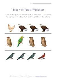 different birds worksheet