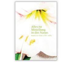 Alles ist Mitteilung, Lilien Blumen Grusskarte - http://www.1agrusskarten.de/shop/alles-ist-mitteilung-lilien-blumen-grusskarte/    00012_0_1374, Blumengruß, Blüten, Grußkarte, Helga Bühler, Klappkarte, Lilie, Natur, Spruch, Zitat00012_0_1374, Blumengruß, Blüten, Grußkarte, Helga Bühler, Klappkarte, Lilie, Natur, Spruch, Zitat