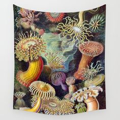 Anemones By Haeckel (sea Plants And Flowers) Wall Hanging Tapestry by Karen Owens - Small: x Sea Plants, Ernst Haeckel, Great Works Of Art, Nature Prints, Fauna, Wall Art Pictures, Free Prints, Tapestry Wall Hanging, Vintage Art