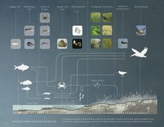 "Food web layout from ASLA student awards, ""Preservation as Provocation"""