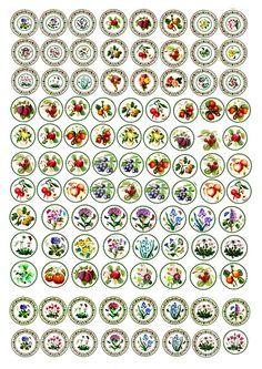 Miniature Printables - Plates. 미니어처자료(펌)★, 캬라의 미니 스튜디오★ : 네이버 블로그