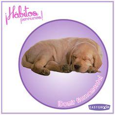 ¿Cuántos ven dormir a su perrito? ¡Son una ternura!