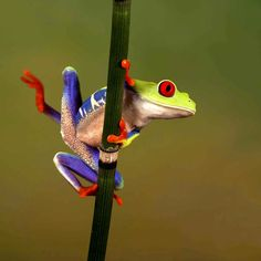 acrobatic-frog-took-time