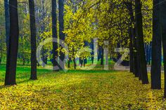 Qdiz Stock Photos | Row of Autumn Trees with Yellow Leaves,  #autumn #background #branch #colorful #day #environment #fallen #foliage #golden #grass #green #ground #landscape #lane #leaf #leaves #line #lush #nature #nobody #outdoor #park #row #scenery #season #tranquil #tree #trunk #wood #yellow
