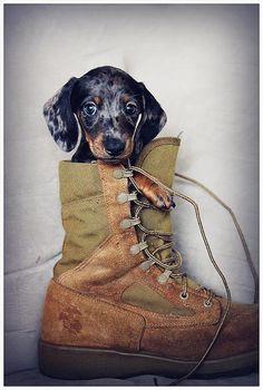 cute puppy!!!i should try this with my dog.im going to try this with my dads work shoe