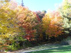 Fall colors, VT
