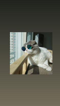 Wallpaper Tumblr Lockscreen, Cat Wallpaper, Wallpaper Pictures, Animal Wallpaper, Aesthetic Iphone Wallpaper, Aesthetic Wallpapers, Wallpaper Backgrounds, Cat Aesthetic, Flower Aesthetic