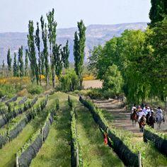 Bodega #Algodon #Wine #Estates (San Rafael, #Mendoza)