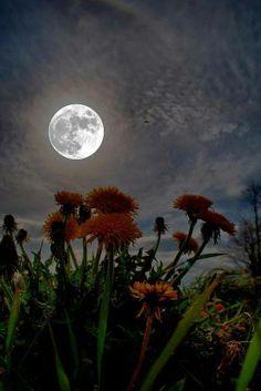 Winter Moon !!