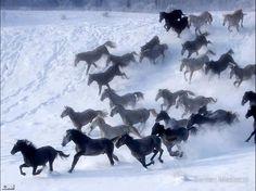 Wild horse stampede - https://sphotos-a.xx.fbcdn.net/hphotos-ash3/553086_516677168354499_1816909809_n.jpg