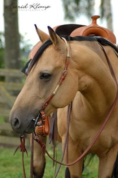 Yup, another Buckskin, bridle and saddle optional. All The Pretty Horses, Beautiful Horses, Animals Beautiful, Horse Love, Horse Girl, Buckskin Horses, American Quarter Horse, Western Pleasure, Majestic Horse