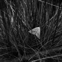 Sophy Rickett Death, Butterfly, Black And White, Artist, Animals, Image, Beautiful, Fotografia, Animales