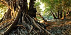 """Résultat de recherche d'images pour """"arbre racine hd"""""""