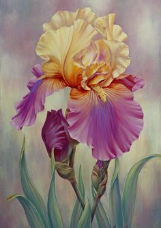 Delicate Beautiful Acrylic Painting Ideas To Try 23 Feine Acrylmalerei-Ideen Weitere Informationen Iris Painting, 5d Diamond Painting, Arte Floral, Watercolor Flowers, Watercolor Paintings, Art Paintings, Flower Paintings, Painting Flowers, Acrylic Paintings