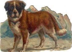 Victorian Die Cut Scrap St Bernard Dog c1880