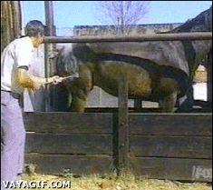 j adores les chevaux