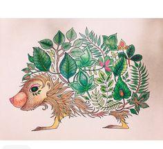 Floresta mágica/jardim secreto porco espinho