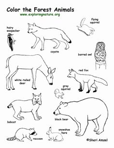 Forest Animals Coloring Pages. 20 forest Animals Coloring Pages. forest Animal Coloring Pages to Print Forest Coloring Pages, Animal Coloring Pages, Colouring Pages, Coloring Sheets, Coloring Books, Woodland Creatures, Woodland Animals, Forest Animal Crafts, Forest Crafts