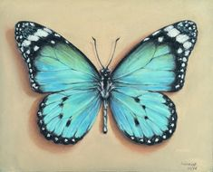 Butterfly in pastel Butterfly Sketch, Butterfly Painting, Butterfly Wings, Art Sketches, Art Drawings, Wings Drawing, Butterfly Pictures, Pastel Pencils, Polychromos