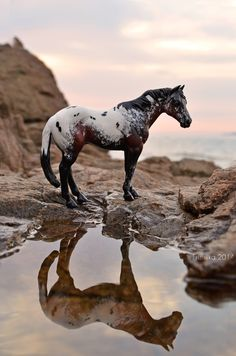 This Schleich horse was photographed by a very talented photographer! All The Pretty Horses, Beautiful Horses, Animals And Pets, Cute Animals, Bryer Horses, Appaloosa Horses, Clydesdale Horses, Majestic Horse, Horse Sculpture